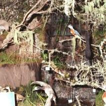 Barraco y ROCAS ARTIFICIALES creando cascada en Expo Prado