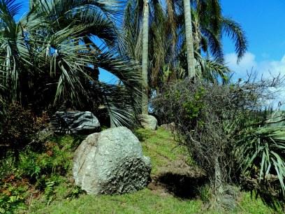 Palmas y rocas