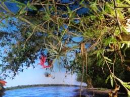 Vegetación deshidratada y pintada (CARU)