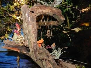 Mariposa, clavel de aire (CARU)