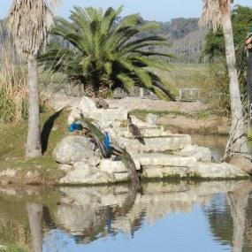 Parque Nacional Santa Teresa - DESPUES de transformaciòn