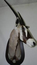 Grensbuck