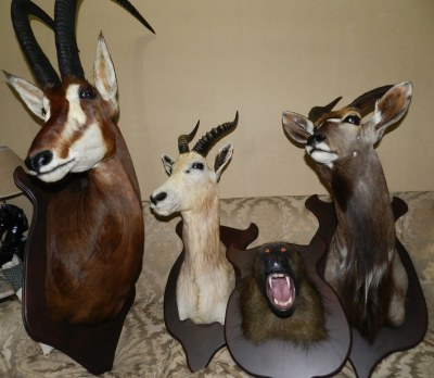Antílope Sable, Blenbuck , Inyala y Mono