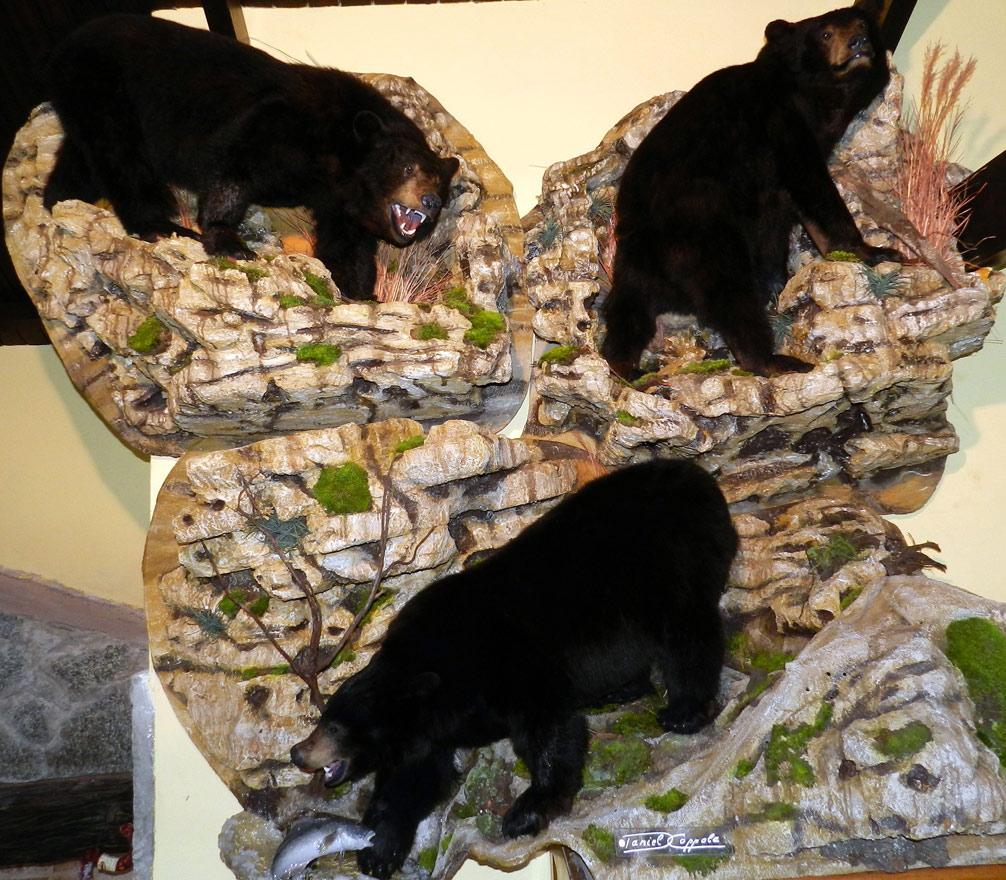 Alfombra de osos negros taxidermizados
