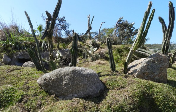 Cactus, césped